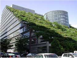 green-roof-250